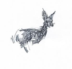 deer sketch Jacqueline Perry 010713