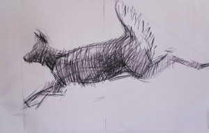 Gesture drawing of a running deer by Jacqueline Perry, charcoal on newsprint, 2013