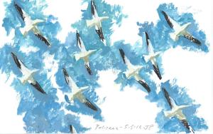 American Pelicans in Sky 050313